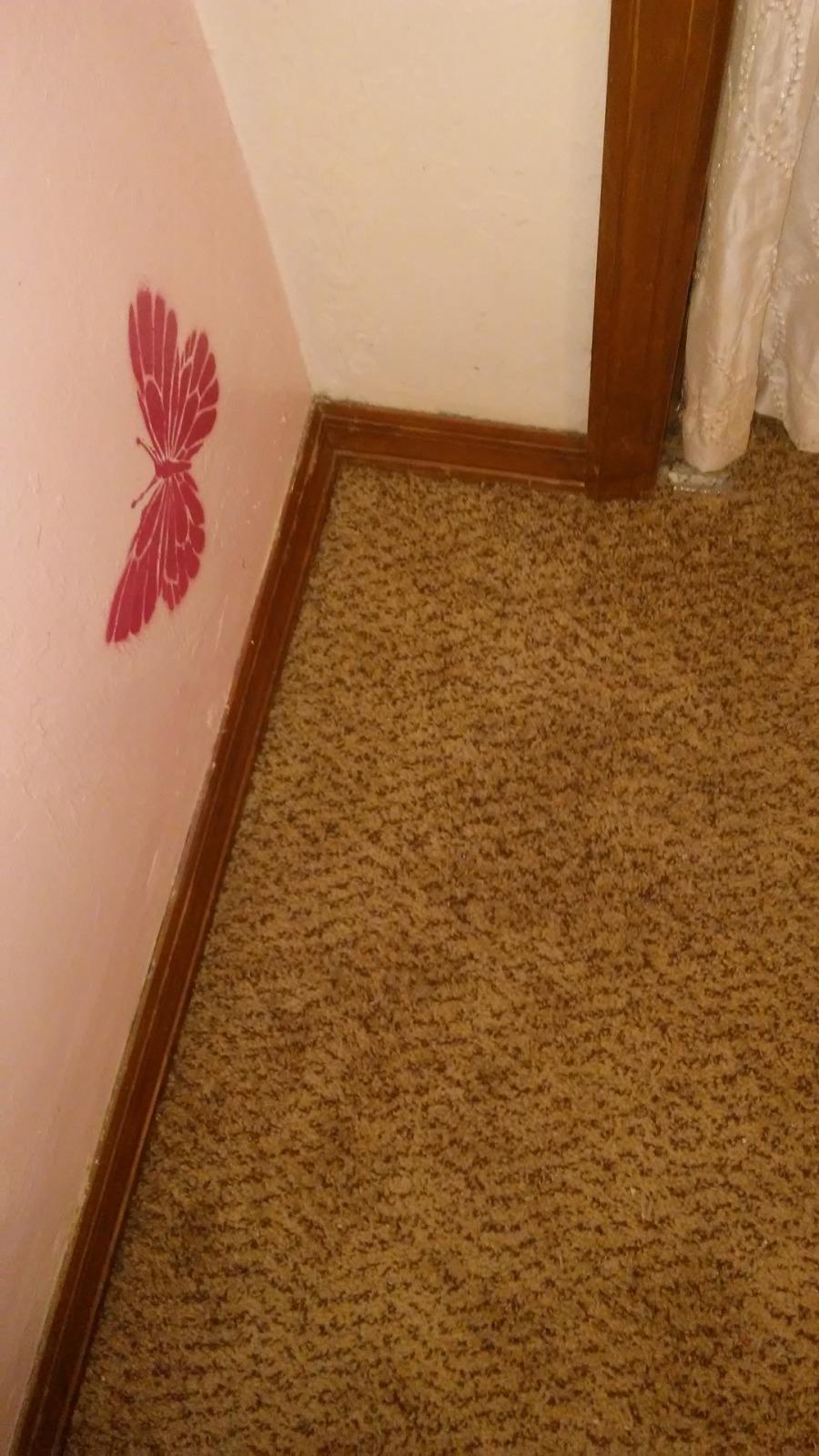 Gainesvilles local carpet repair specialists how to stretch carpet yourself solutioingenieria Choice Image